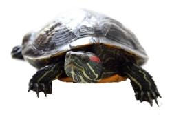 Como alimentar a sua <b>tartaruga</b> - Hospital dos Animais hospital <b>...</b> 2014
